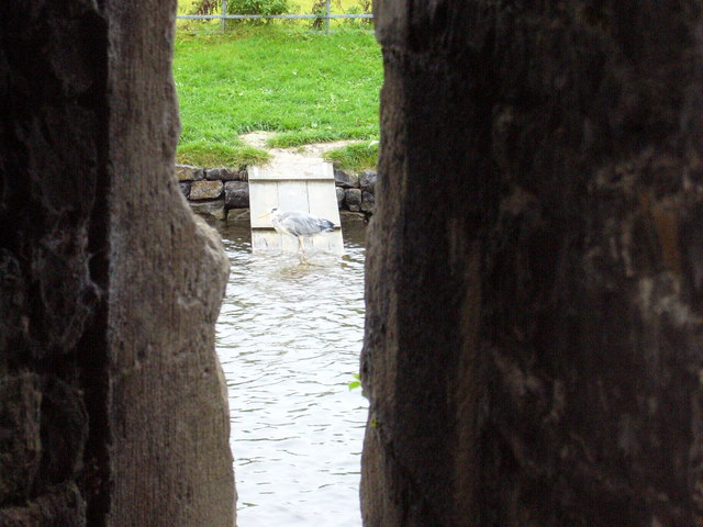 Heron in Beaumaris Moat