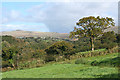 SX5279 : Peter Tavy: Tavy valley 2 : Week 40