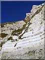 SY7780 : Lower Chalk cliffs, White Nothe by Jim Champion