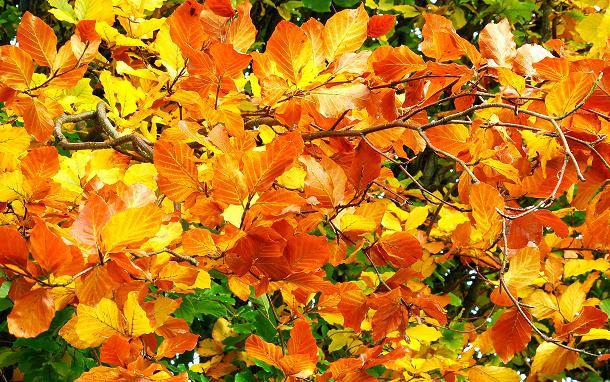 Autumn leaves, Dixon Park, Belfast