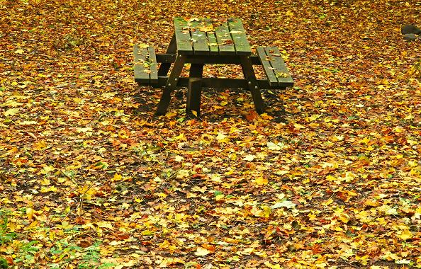 Picnic table, Glenarm forest