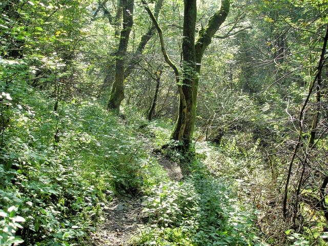 Footpath along Monk's Dale