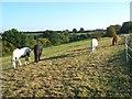SU7895 : Horses, Beacon's Bottom by Andrew Smith