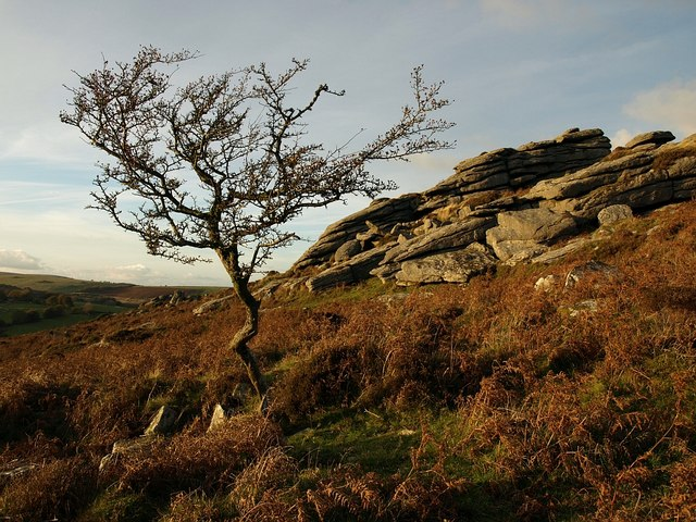 Hawthorn and rocks near Horra Burrow