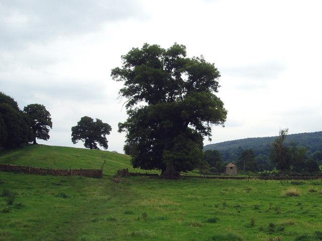 Barn in Derwent valley