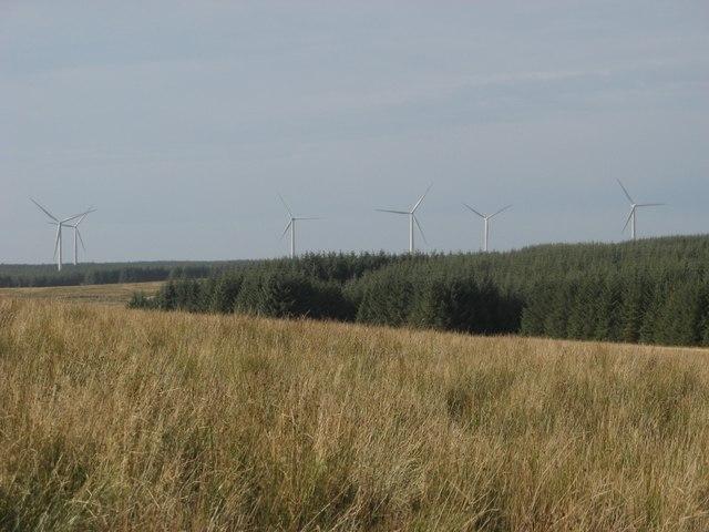 Meadow bog between Sheepfold and Drumreevough