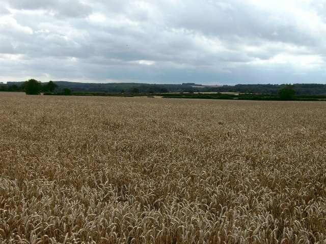 Wheat and Wolds
