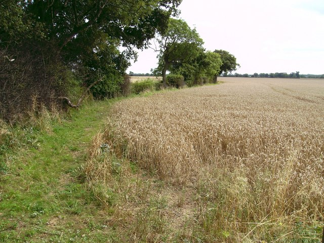 Tree-lined boundary and Wheat