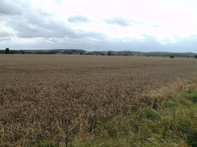 Distant Wolds