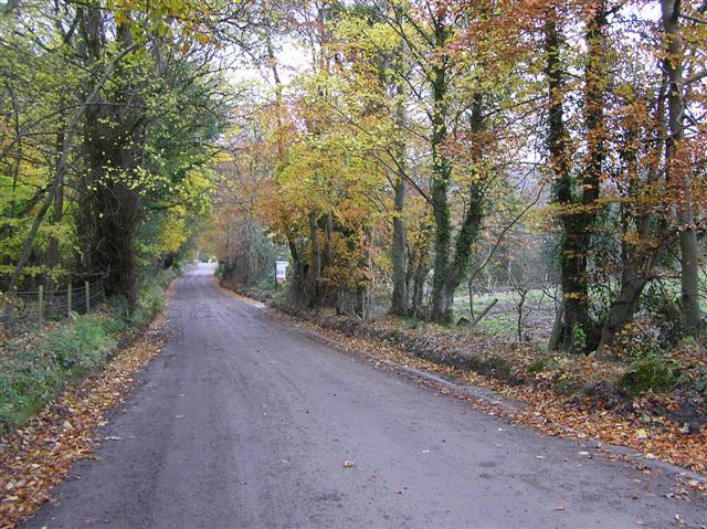 Road at Birdstown Demesne (2)