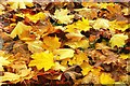 J4846 : Autumn leaves near Downpatrick : Week 45