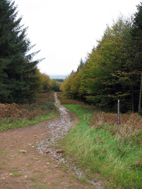 Bridlepath towards Langford