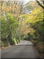 SW7837 : The road from Perran Wharf to Carclew in Autumn by Rod Allday