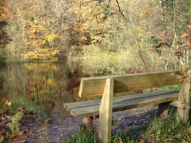 Bench by the reservoir in Chepstow Park Wood