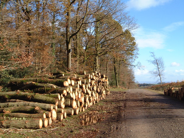 Oak logs in Chepstow Park Wood