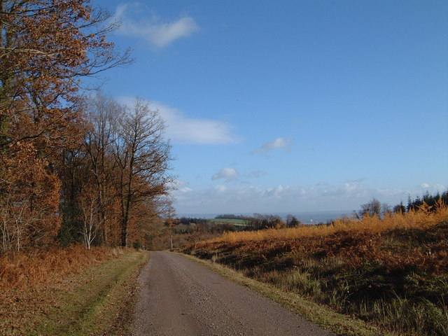 View towards Pen-y-Parc in Chepstow Park Wood
