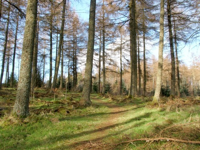 Loop walk (outward leg) - re-entering the woods