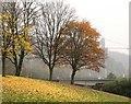 ST5671 : Last of the Autumn Leaves : Week 46