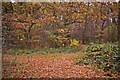 Dist:0.3km<br/>Wonderful autumn colours with fallen leaves on the ground of this footpath through the wooded area of the Cheyne Walk Open Space.