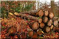 SU6980 : Timber stack in New Copse by Graham Horn: Week 46