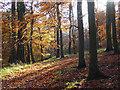 SU7687 : Great Wood, Hambleden by Andrew Smith