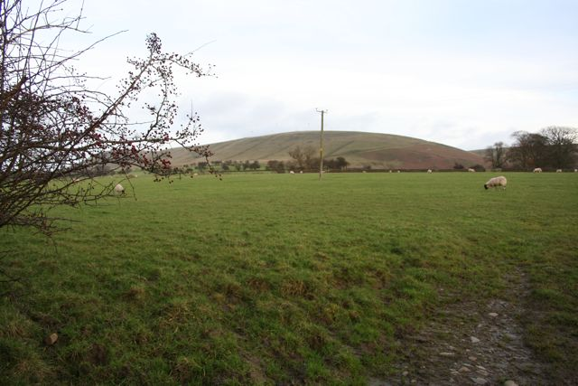 Sheep grazing against a background of Pendle Hill