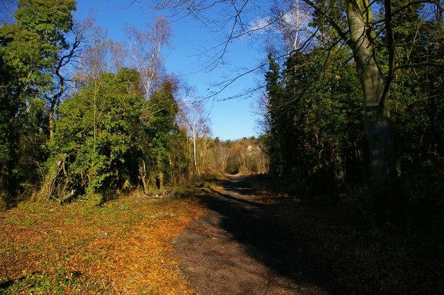 Path Through The Treacle Mine