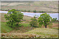 SD9232 : Sycamores above Widdop Reservoir by Phil Champion