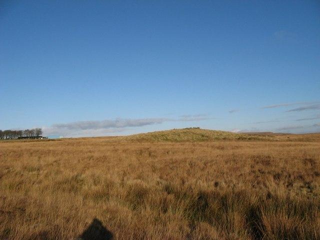 A moorland hillock