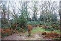 TQ5942 : Owl sculpture, Barnett's Wood by N Chadwick
