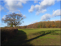 SU8497 : Farmland, Naphill by Andrew Smith