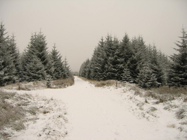 snow covered forest track