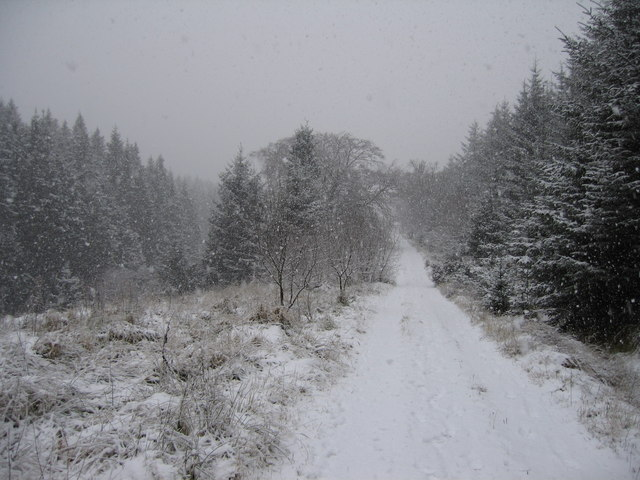 forest track in a blizzard