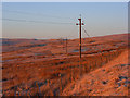 NY6542 : Poles on the moor, Hartside : Week 48