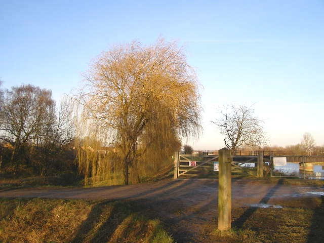 Willow in winter, Coronation Channel bank