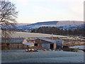 NY7143 : Farm buildings, sheep and frost at Howburn : Week 48