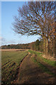 TL9066 : Bridleway to Great Barton by Bob Jones