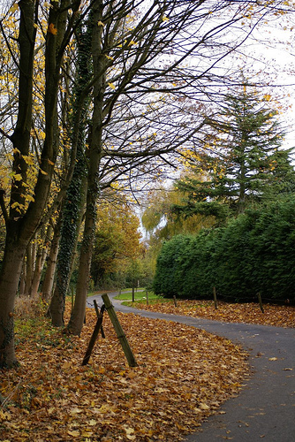 Autumnal lane