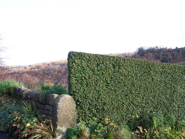 Top Topiary on Roscoe Bank, Rivelin Valley, Sheffield