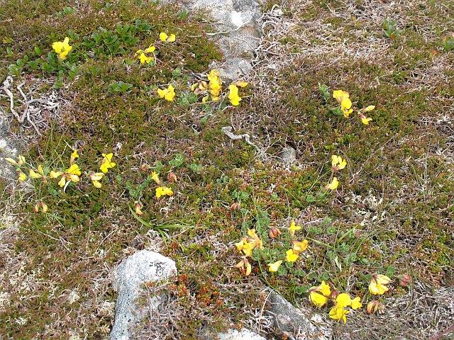 Tundra vegetation  Ben...