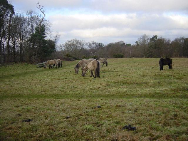 Hothfield Heathlands