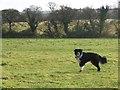 ST4257 : Winscombe Field by Ms Dixon