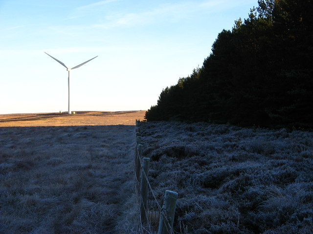 Forest Edge and Wind Turbine