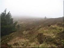 R6418 : Black Rock on the Ballyhoura Mountain Range by Bryan Conlon