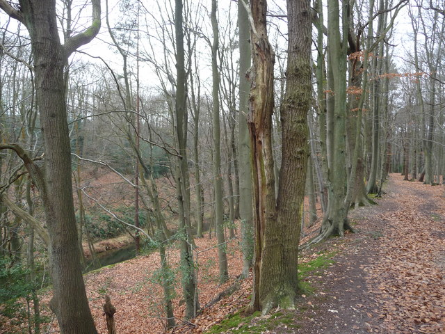 Track through the woods above the 'deep cut' and canal