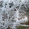 SO0920 : Hoar frost detail by Jonathan Billinger