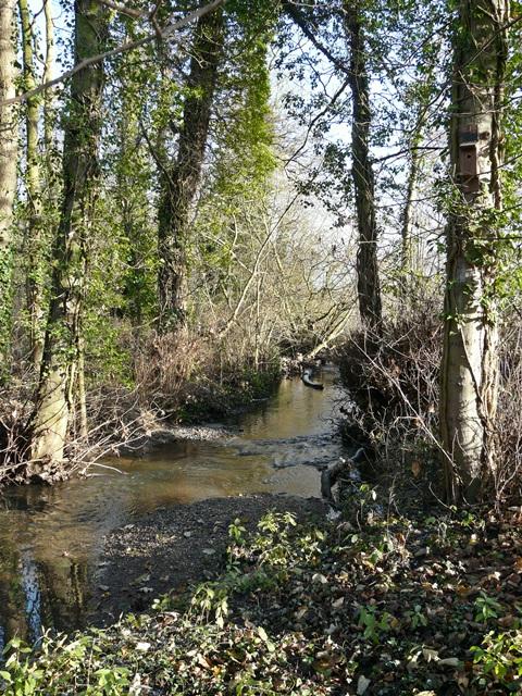 Langley Brook, Middleton Lakes RSPB Reserve
