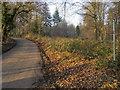 SU8087 : Footpath into Heath Wood by Shaun Ferguson
