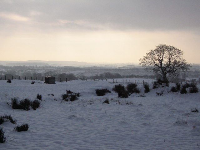 Winter Landscape