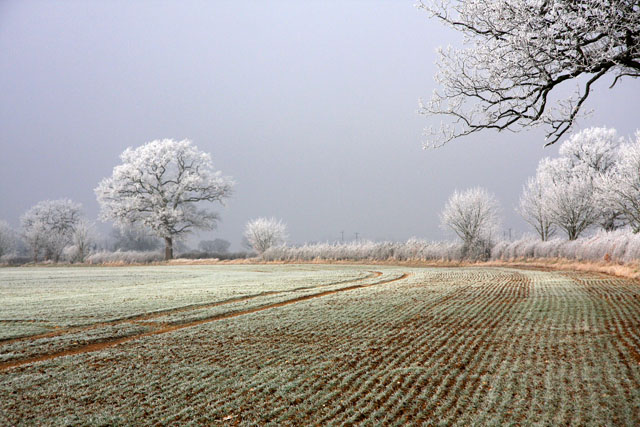 Hoary morning near Risby